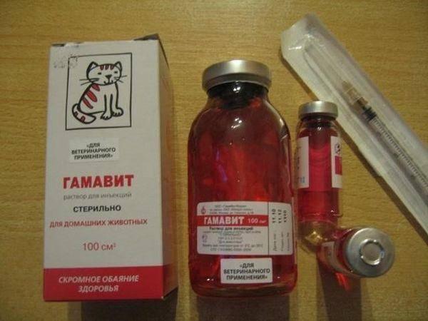 Гамавит для кошек и собак: инструкция по применению