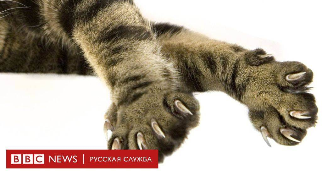 Можно ли курицу котятам. можно ли давать кошке куриные кости