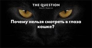 Почему нельзя смотреть кошке в глаза — ответы