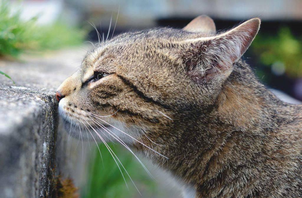Кот метит территорию — как бороться с кошачьими «метками»
