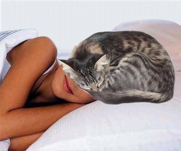 Причины почему кошки любят спать возле своих хозяев: на груди, у головы, в ногах