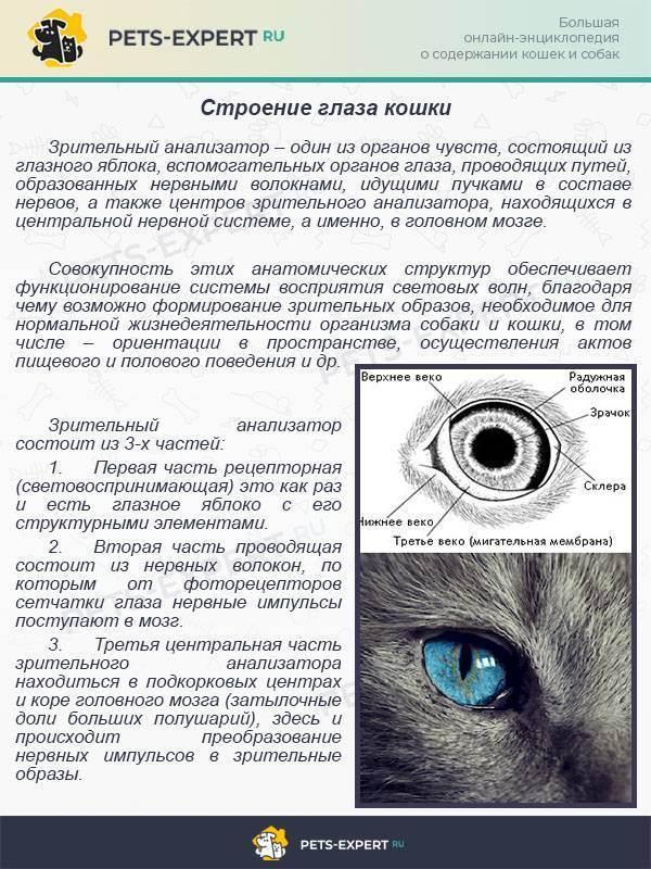 Синдром кошачьего глаза: что это такое, симптомы (фото), лечение, прогноз