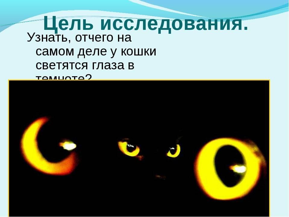 Почему у кошек в темноте глаза светятся, чем обусловлено это необычное явление?