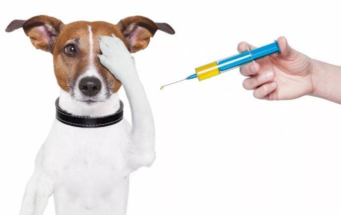 Стоит ли делать прививки домашним животным? аргументы за и против