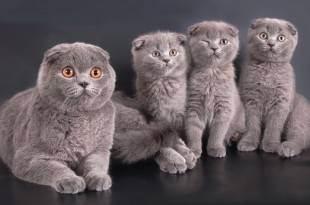 Новорожденные котята, зачем им нужна ваша помощь?