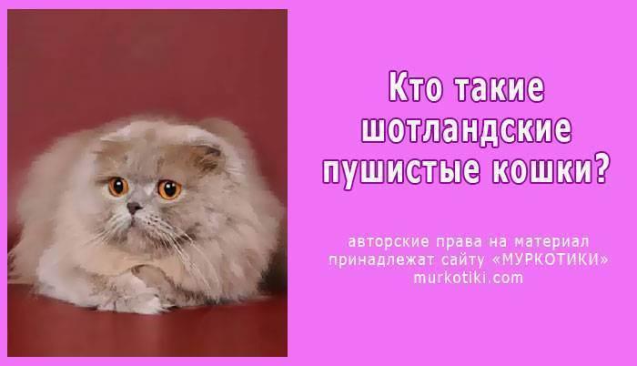 Как начать разводить кошек и стать заводчиком?