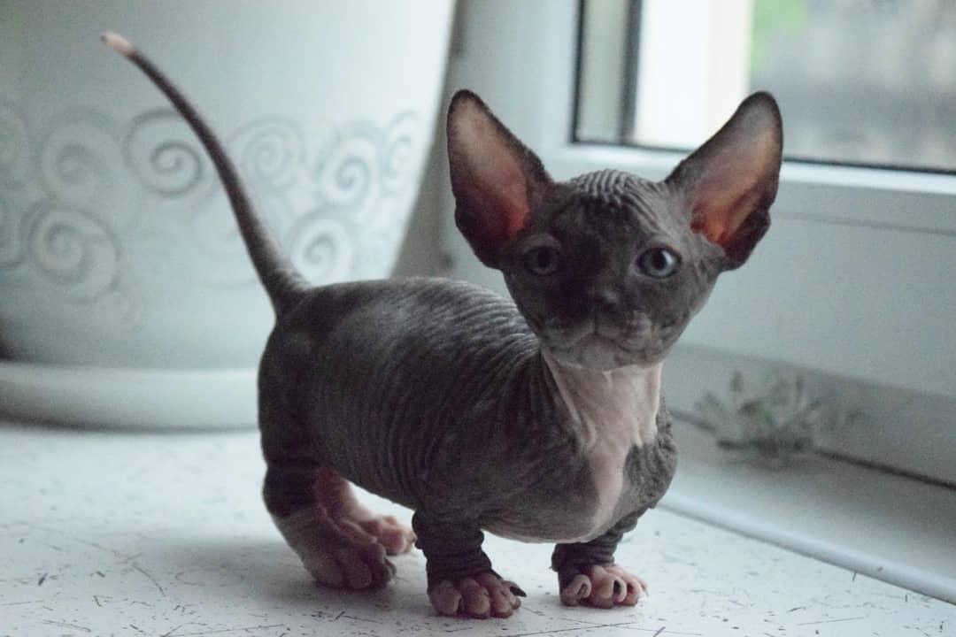 Какая температура тела у кошек считается нормой?