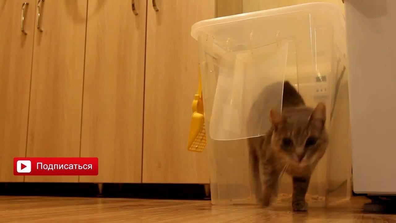 Какой кошачий туалет лучше?