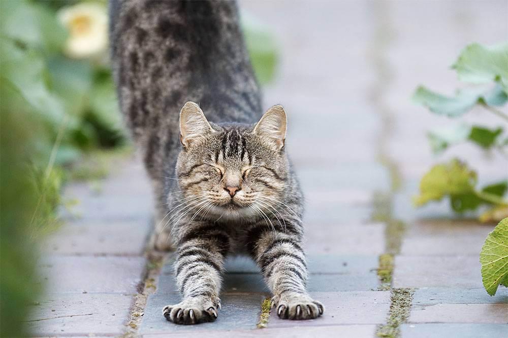 Операция для кошек «мягкие лапки»: особенности процедуры и послеоперационный уход за питомцем