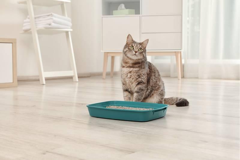 Кошка гадит на кровать. несколько причин которые помогут понять