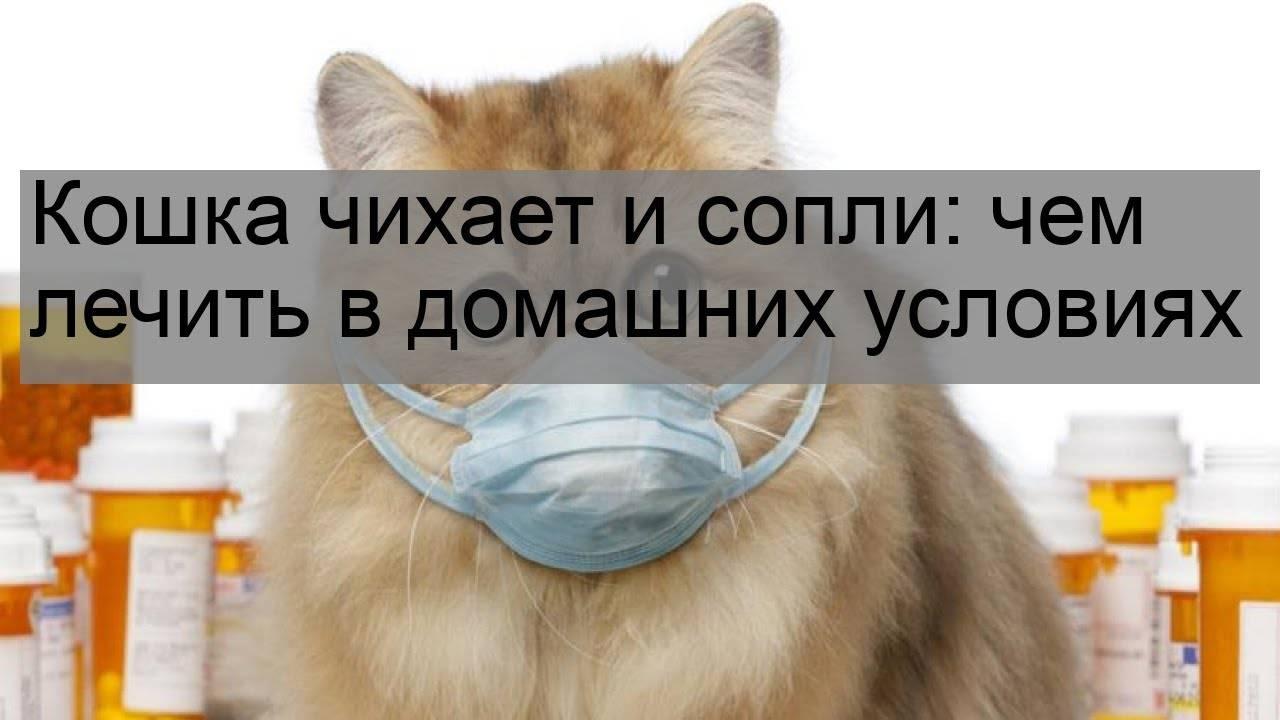 Кошка чихает: причины и лечение в домашних условиях, меры профилактики