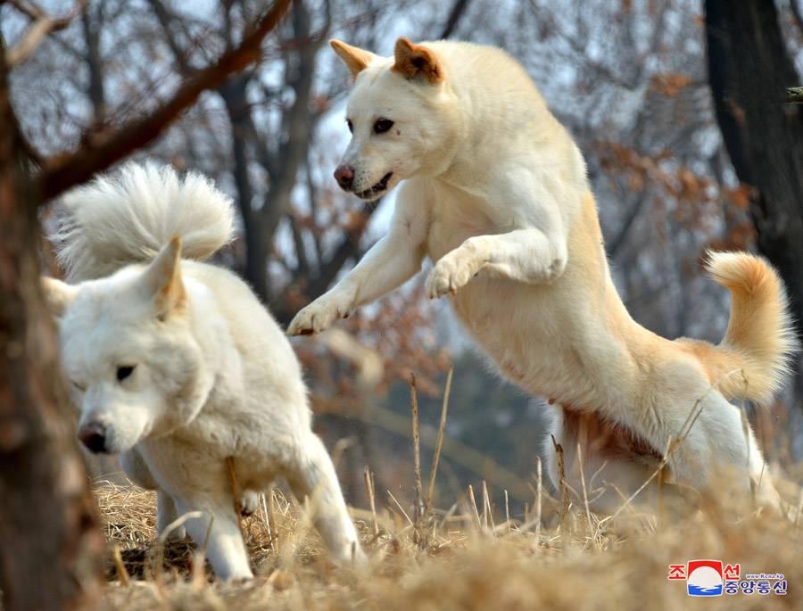 Японский хин — плюсы и минусы породы собак | плюсы и минусы