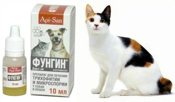Фунгин форте для кошек от аллергии