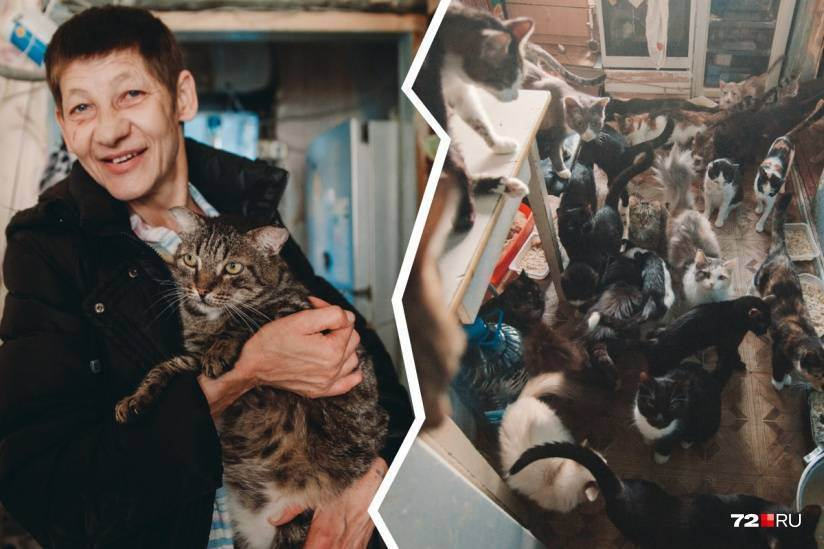 Cайт кошки масяни кото - анекдоты