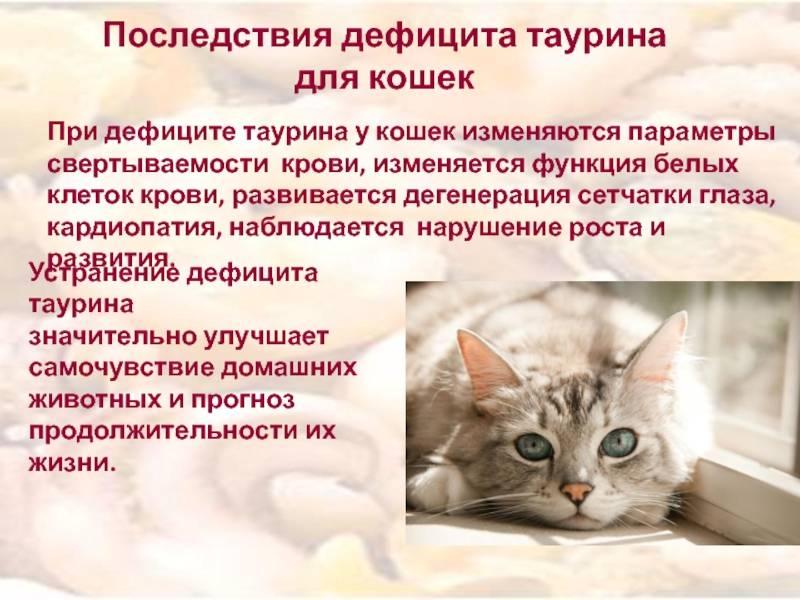 Гипотиреоз у кошек: причины, симптомы, диагностика и лечение