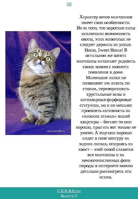 Порода недовольного кота
