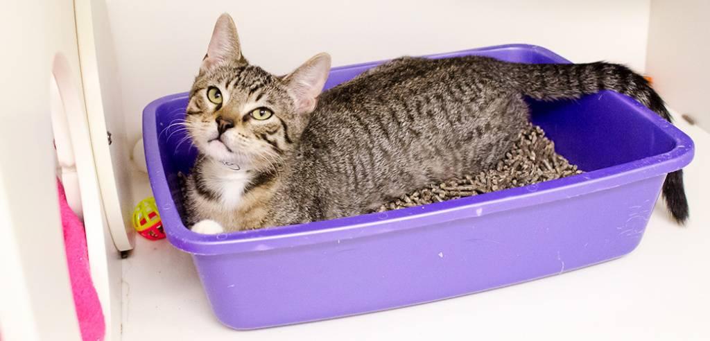 Почему кошка начала гадить не в лоток, а на пол: что делать?