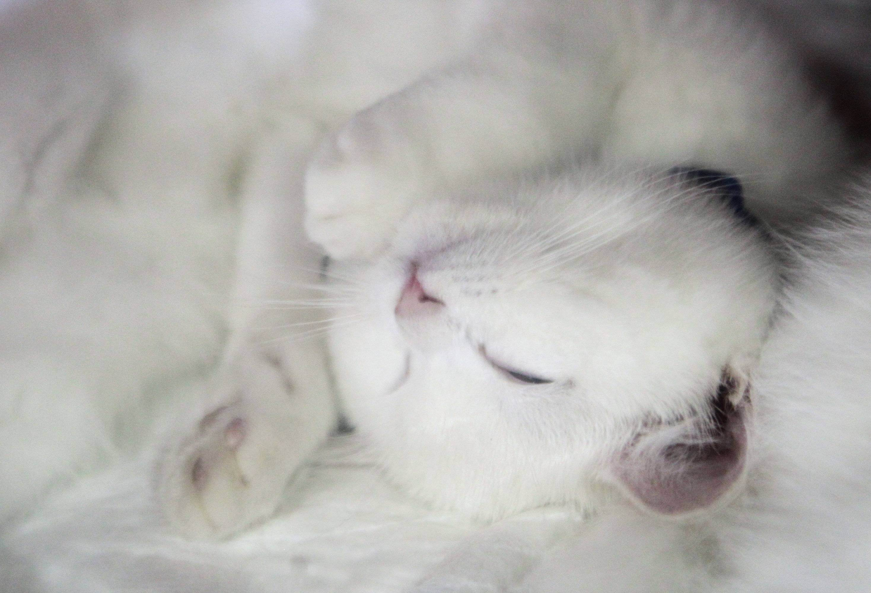 Смешные кошачьи законы, кодексы котов, правила, инструкции, дневники котов и смешные истории о кошачьих - 5