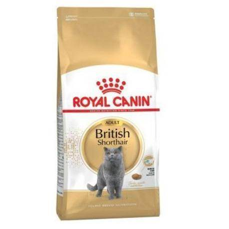 Британские коты: чем кормить кошек британцев — lapy-i-hvost