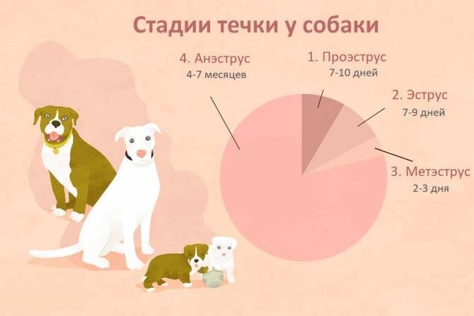 Сколько дней гуляет кошка, как часто и почему меняется поведение?