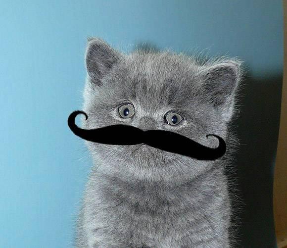 Сколько усов имеется у кошки
