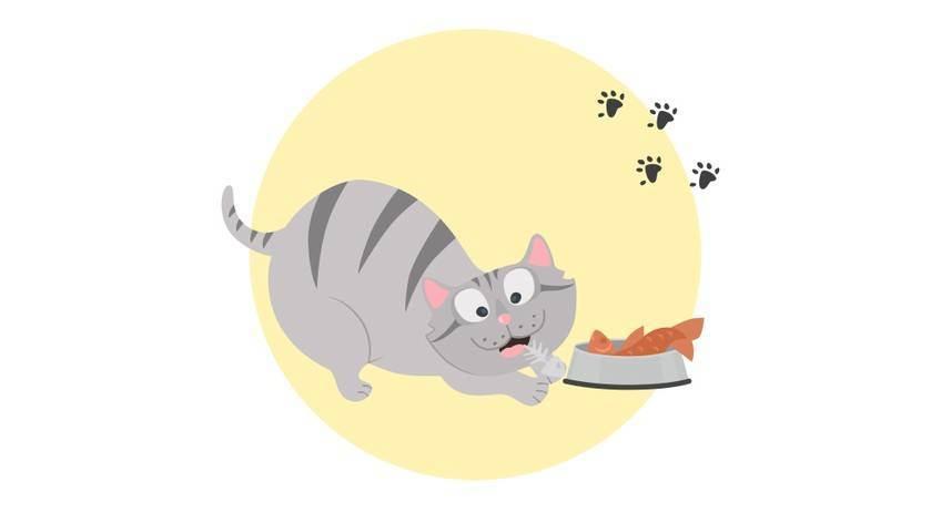 Почему кошкам нравятся оливки. почему кошки любят оливки и маслины, что их привлекает? стоит ли угощать питомца оливками