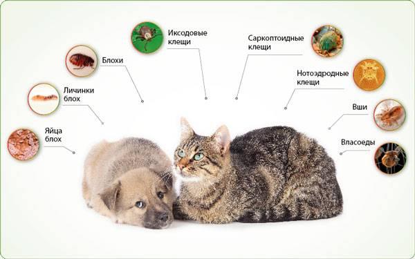 Лечение колита кишечника у кошек