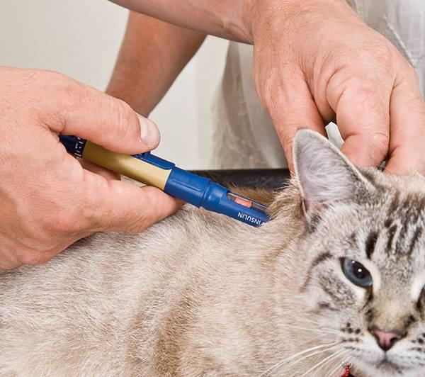 Учимся делать укол кошке в холку и внутремышечно