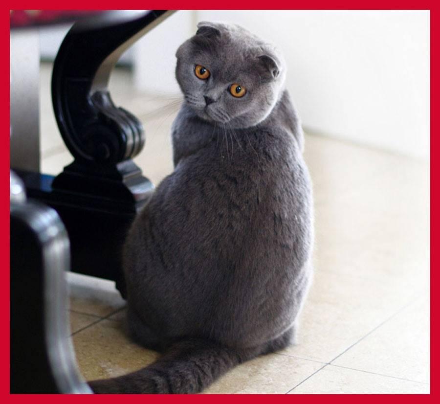 Самые красивые кошки в мире: смотрите рейтинг самых милых пород
