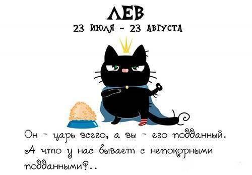 Гороскоп для кошек по знакам зодиака