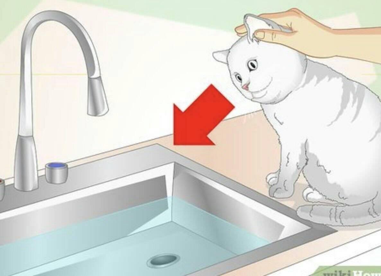 Требования к воде для купания кошек: определение оптимальной температуры