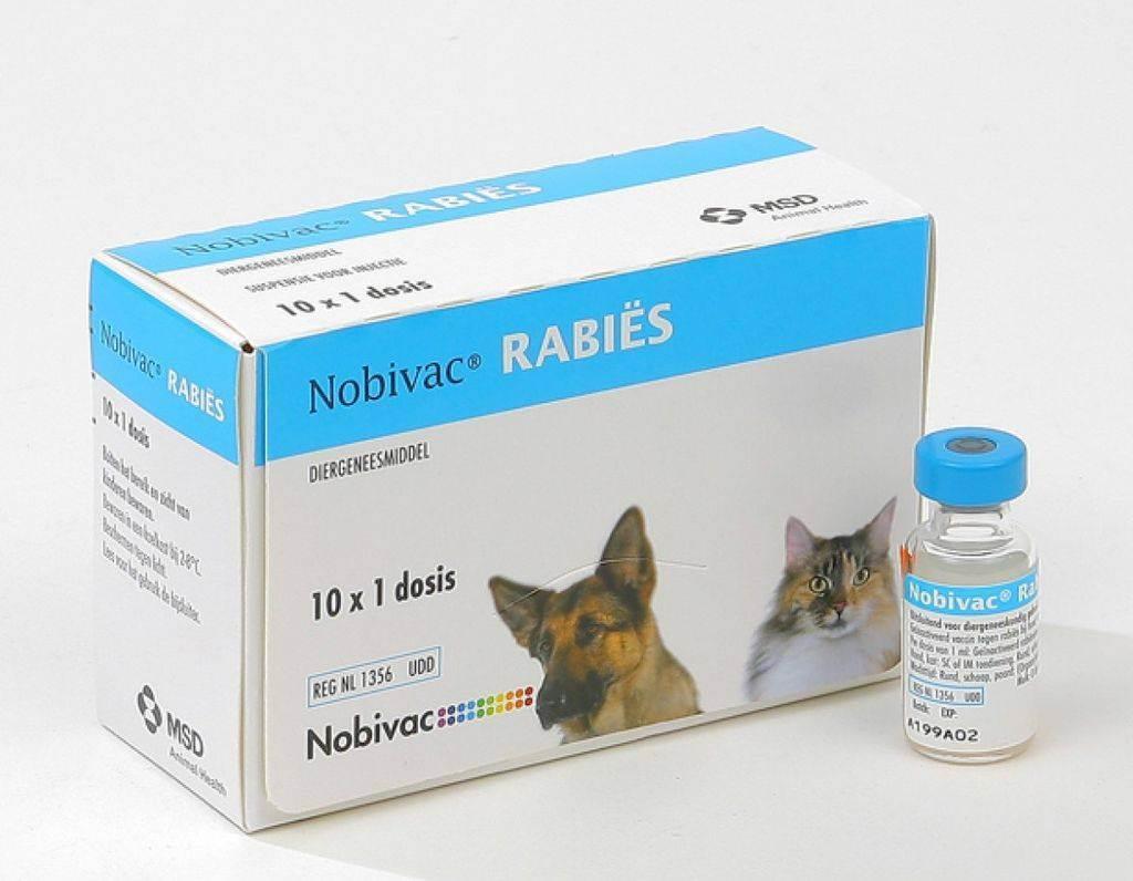 Рабизин вакцина для собак │ инструкция по применению рабизина собакам