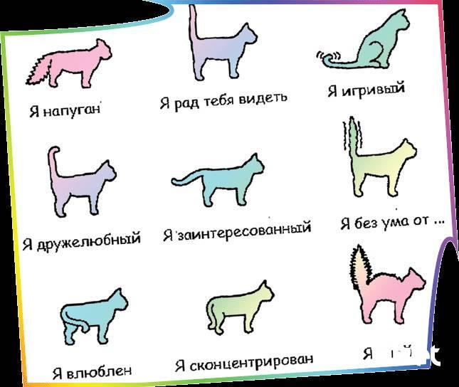 Почему кошки виляют хвостом: варианты что это значит