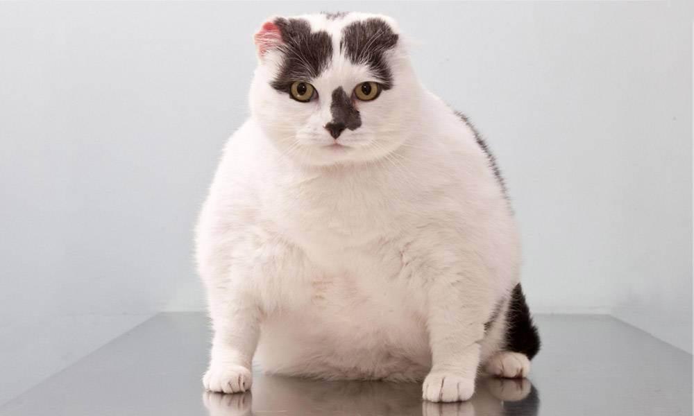 Кормление кошек | заметки ветеринара