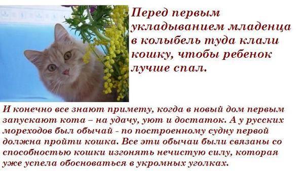Почему коты или кошки уходят из дома и не возвращаются - народные приметы