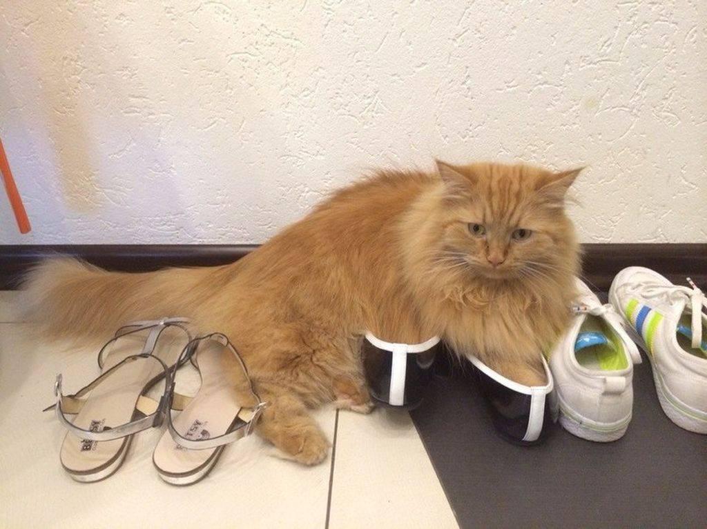 Как избавиться от запаха кошки в обуви