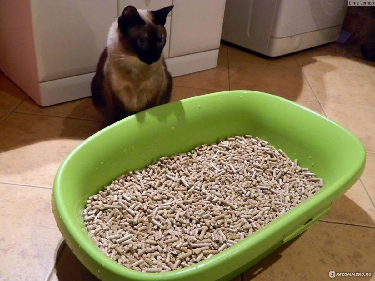 Наполнитель для кошек и котов: какой лучше