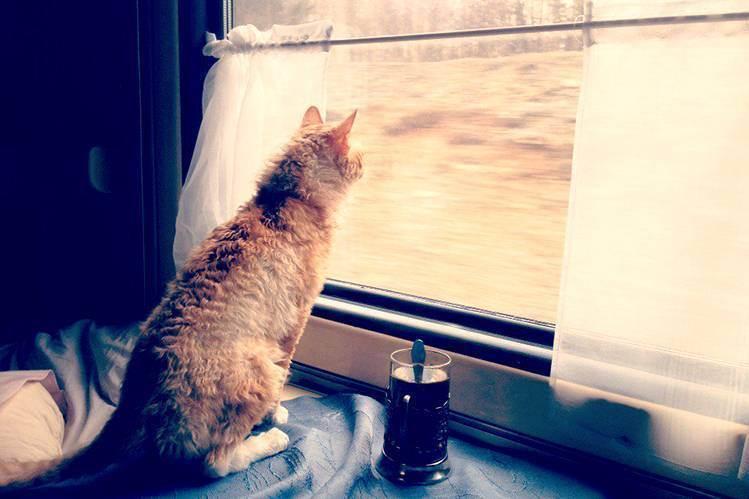 Кот не переносит поездки в автомобиле. поездка с кошкой в автомобиле: основные правила