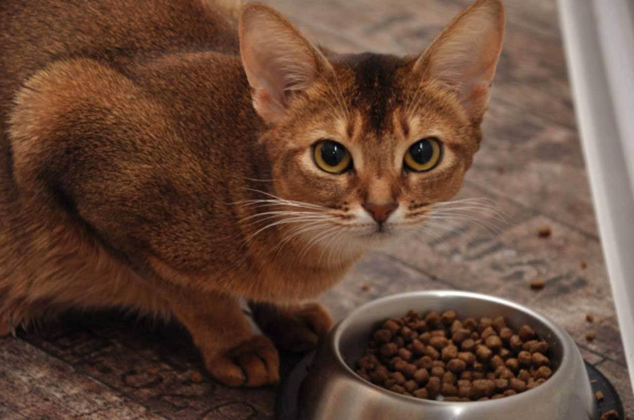 Какой хороший корм для кошек: отзывы ветеринаров и владельцев
