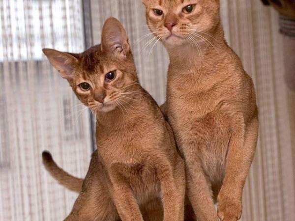 Можно ли держать в доме кошек при аллергии и астме