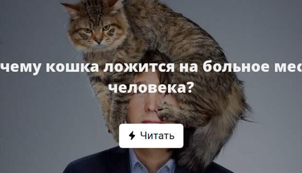 Кошки всегда садятся на больное место мем. почему кошка на больное место человека ложится