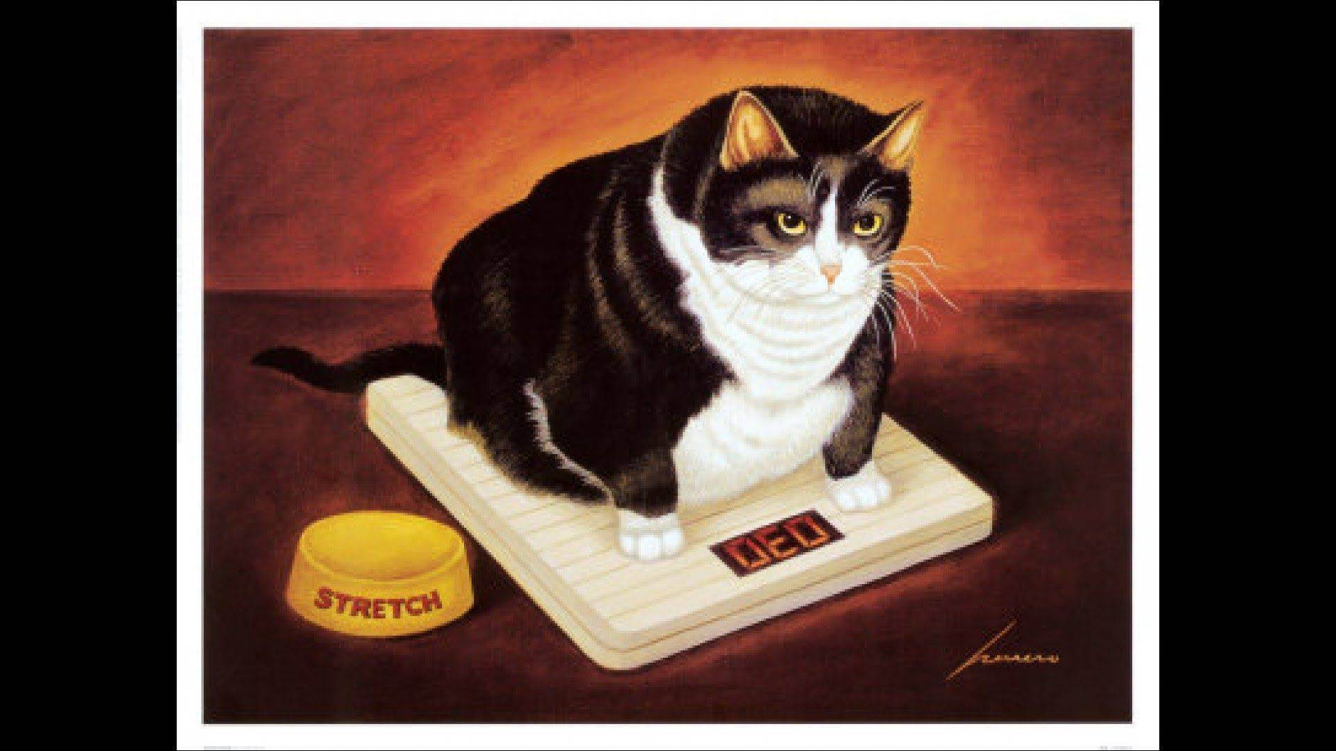 Как похудеть кошке и коту - диета при ожирении