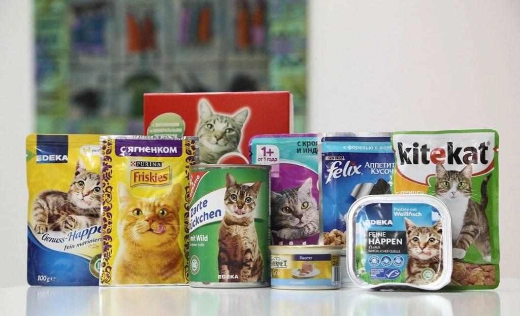 Чем лучше всего кормить кошку: рейтинг сухих и влажных кошачьих кормов от эконом- до супер-премиум-класса