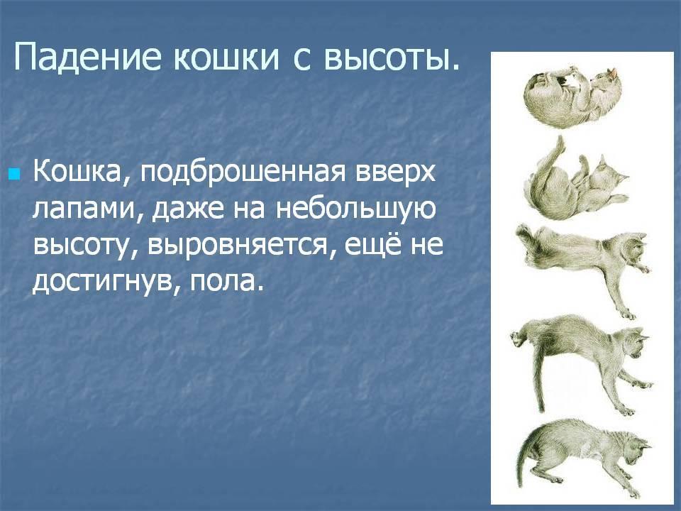 Зачем кошке хвост? какие функции выполняет эта часть тела?