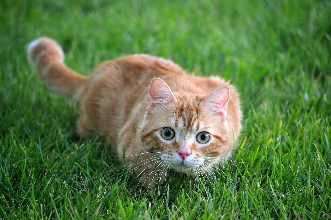 Почему человеческая еда вредна для кошек?