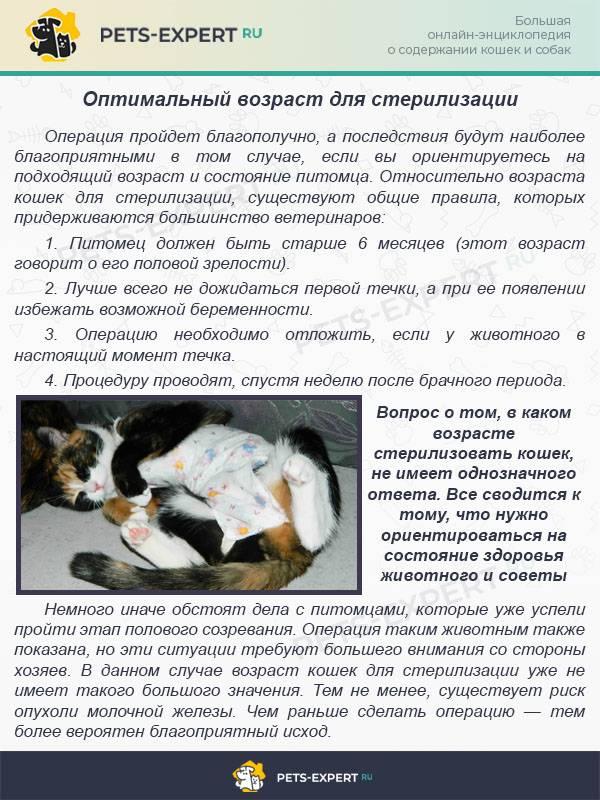 Характерные признаки и этапы течки у кошки, как успокоить животное