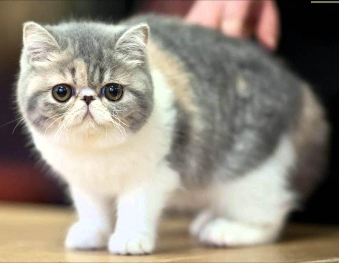 Кот храпит и дёргается во сне - это нормально или признак болезни