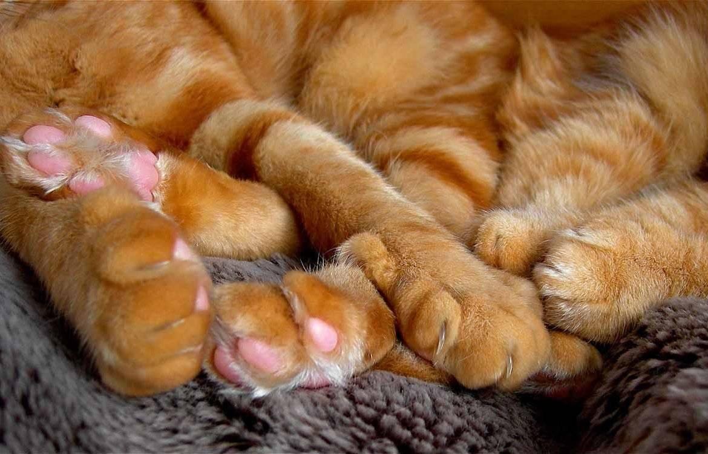 Причины почему кот сосет хвост