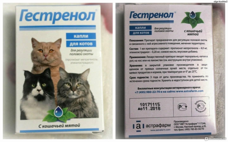 Цистон для кошек: показания к применению и отзывы