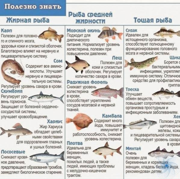 Можно ли кормить кошек рыбой и какие существуют ограничения?
